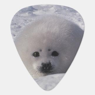 Harp seal (Phoca groenlandica) Harp seal pups Guitar Pick