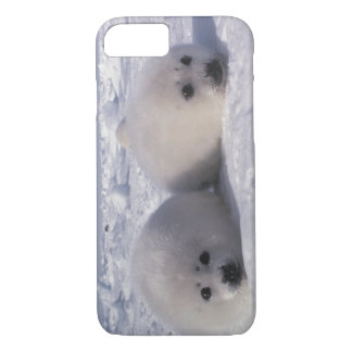 Harp seal (Phoca groenlandica) Harp seal pups iPhone 7 Case
