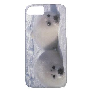 Harp seal (Phoca groenlandica) Harp seal pups iPhone 8/7 Case