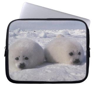 Harp seal (Phoca groenlandica) Harp seal pups Laptop Sleeve