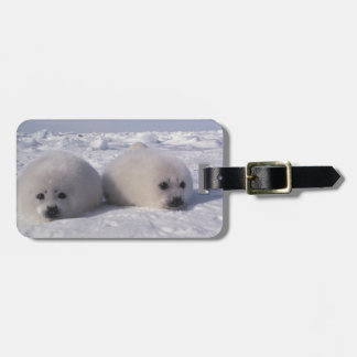 Harp seal (Phoca groenlandica) Harp seal pups Luggage Tag