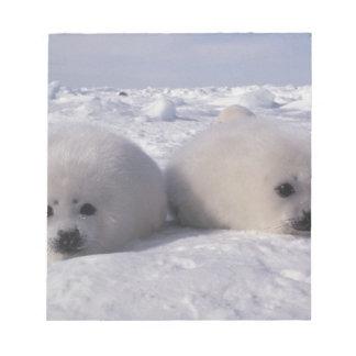 Harp seal (Phoca groenlandica) Harp seal pups Memo Notepads