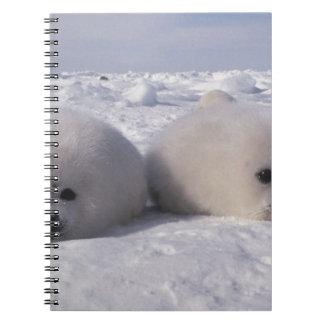 Harp seal (Phoca groenlandica) Harp seal pups Notebooks