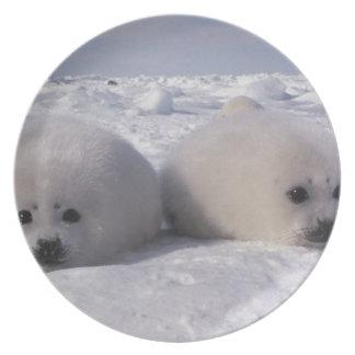 Harp seal (Phoca groenlandica) Harp seal pups Plate