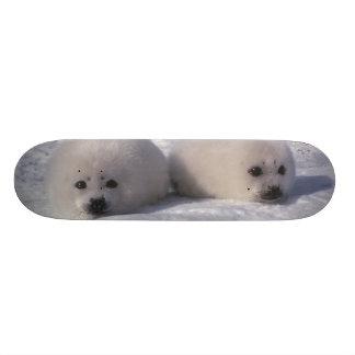 Harp seal (Phoca groenlandica) Harp seal pups Skate Deck