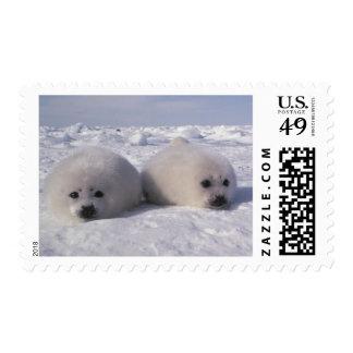 Harp seal (Phoca groenlandica) Harp seal pups Stamps