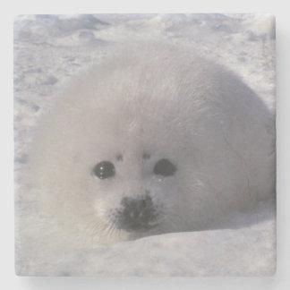 Harp seal (Phoca groenlandica) Harp seal pups Stone Beverage Coaster