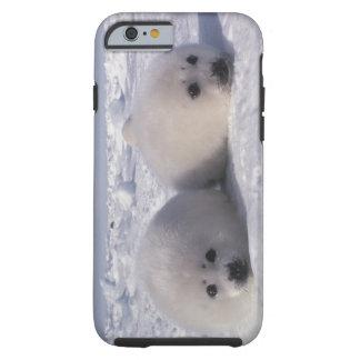 Harp seal (Phoca groenlandica) Harp seal pups Tough iPhone 6 Case