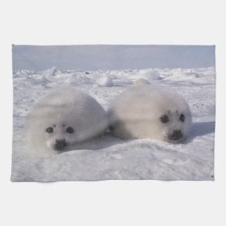 Harp seal (Phoca groenlandica) Harp seal pups Towel