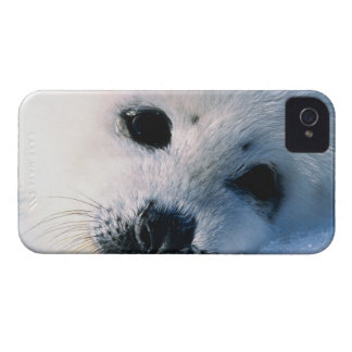 Harp seal pup 2 iPhone 4 cover