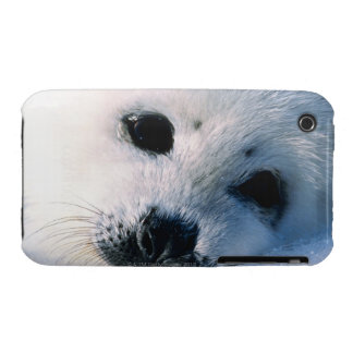 Harp seal pup 2 iPhone 3 cases