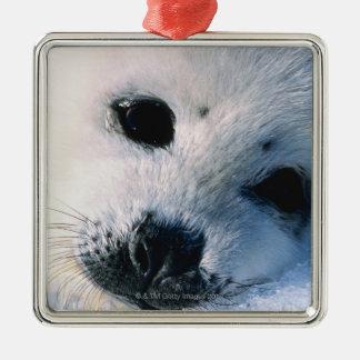 Harp seal pup 2 Silver-Colored square decoration