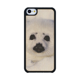 Harp seal pup ice Gulf of St. Lawrence, Carved® Maple iPhone 5C Slim Case