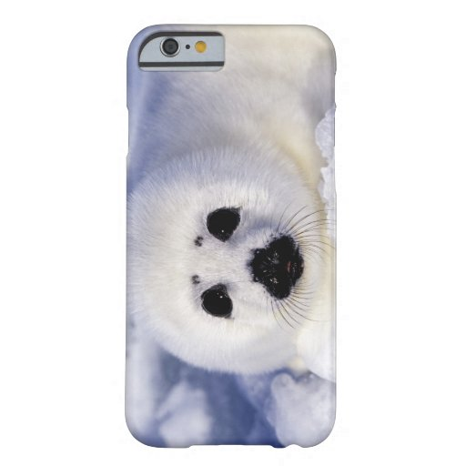 Harp seal pup ice Gulf of St. Lawrence, iPhone 6 Case