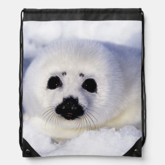 Harp seal pup ice Gulf of St. Lawrence, Drawstring Bag