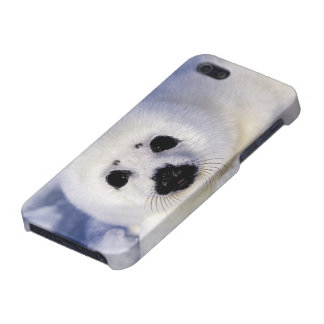 Harp seal pup ice Gulf of St. Lawrence, iPhone 5/5S Case