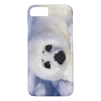 Harp seal pup ice Gulf of St. Lawrence, iPhone 7 Case