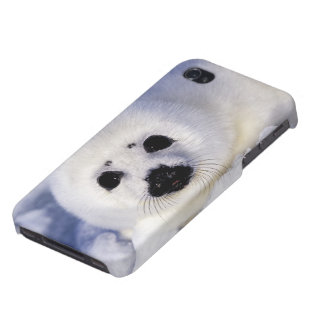 Harp seal pup ice Gulf of St. Lawrence, iPhone 4 Cover