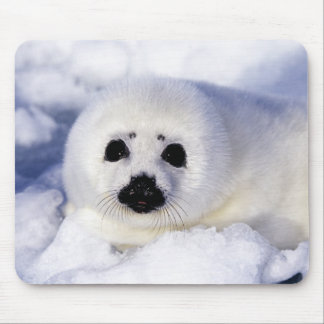 Harp seal pup ice Gulf of St. Lawrence, Mouse Mat