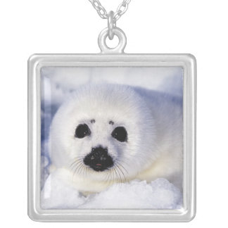 Harp seal pup ice Gulf of St. Lawrence, Silver Plated Necklace