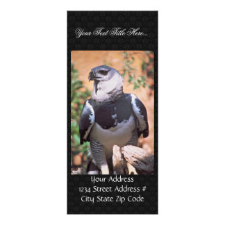 Harpey Eagle Personalized Rack Card