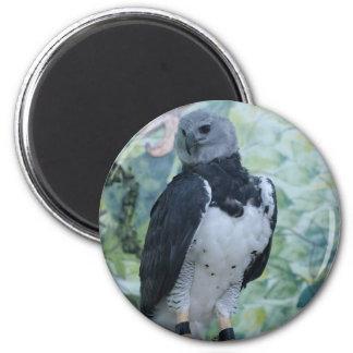 Harpy Eagle Captive 6 Cm Round Magnet