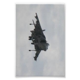 Harrier Photo