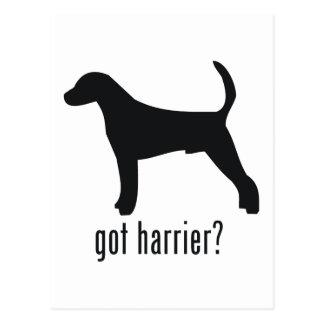 Harrier Postcard