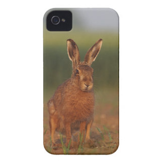 Harriet Hare iPhone 4 Cover