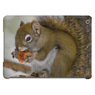 Harriman State Park, Idaho. USA. Red Squirrel iPad Air Case