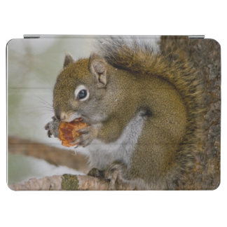 Harriman State Park, Idaho. USA. Red Squirrel iPad Air Cover