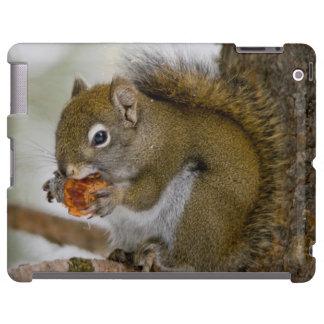 Harriman State Park, Idaho. USA. Red Squirrel iPad Case