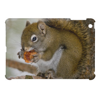 Harriman State Park, Idaho. USA. Red Squirrel iPad Mini Cover