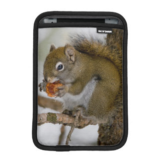Harriman State Park, Idaho. USA. Red Squirrel iPad Mini Sleeve