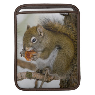 Harriman State Park, Idaho. USA. Red Squirrel iPad Sleeve