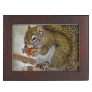 Harriman State Park, Idaho. USA. Red Squirrel Keepsake Box