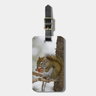 Harriman State Park, Idaho. USA. Red Squirrel Luggage Tag