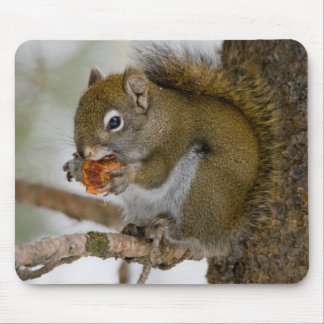 Harriman State Park, Idaho. USA. Red Squirrel Mouse Mat
