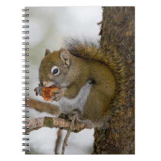 Harriman State Park, Idaho. USA. Red Squirrel Notebooks