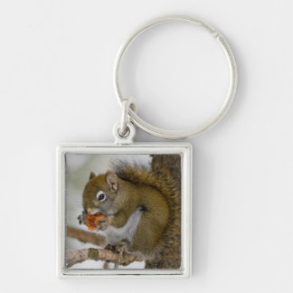 Harriman State Park, Idaho. USA. Red Squirrel Silver-Colored Square Key Ring