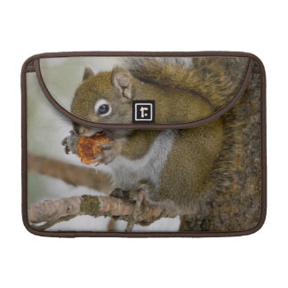Harriman State Park, Idaho. USA. Red Squirrel Sleeve For MacBook Pro