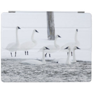 Harriman State Park, Idaho. USA. Trumpeter Swans iPad Cover