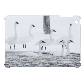 Harriman State Park, Idaho. USA. Trumpeter Swans iPad Mini Covers