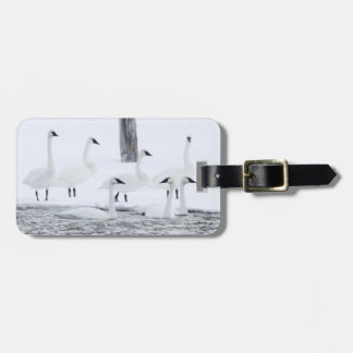 Harriman State Park, Idaho. USA. Trumpeter Swans Luggage Tag