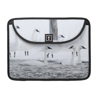 Harriman State Park, Idaho. USA. Trumpeter Swans Sleeve For MacBook Pro