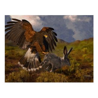 Harris Hawk and Jackrabbit - acrylic Postcard