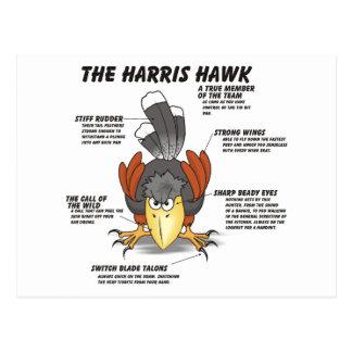 Harris Hawk Cartoon Postcard