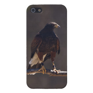 Harris' Hawk iPhone 5/5S Case