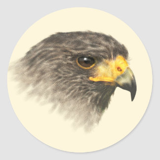 Harris Hawk - Mixed Medium Classic Round Sticker
