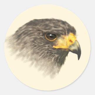 Harris Hawk - Mixed Medium Round Sticker